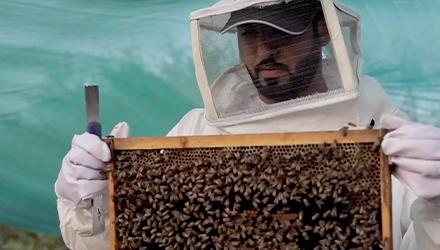 تاريخ تربية النحل التقليدية في إمارة أبوظبي وطرائقها